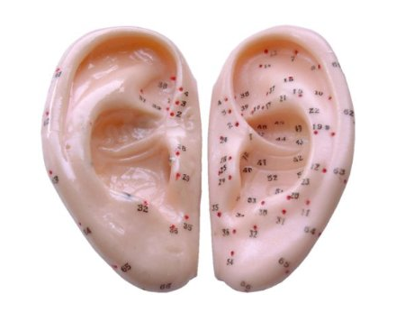 Acupuncture Ear Model